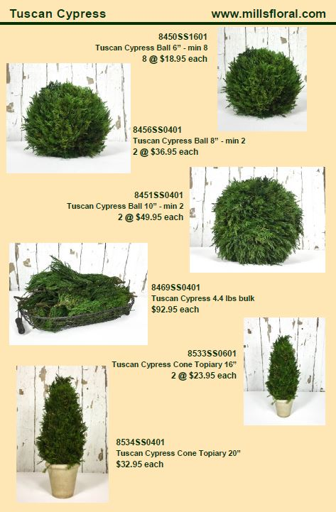 cypress-2.jpg