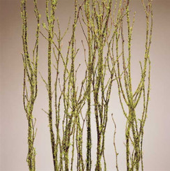 BIRCH BRANCHES - MOSSCOAT - 5 PCS