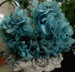 Preserved Hydrangea - Blue - 3 pcs - packed 12