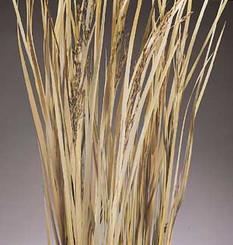 """WILD GRASS BUNCH - NATURAL - (45""""- 55"""")"""
