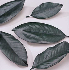 MAGNOLIA LEAVES - PRESERVED BULK - GREEN