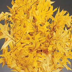 Transparent Oak Leaves - Yellow - 25 Bunches/Cs