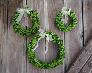 Preserved Boxwood Wreath - 3 pc Set - Round w/Ribbon
