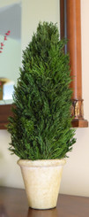 TUSCAN CYPRESS CONE TOPIARY - 20""