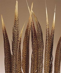 """GOLDEN PHEASANT FEATHERS NATURAL 18-20"""""""