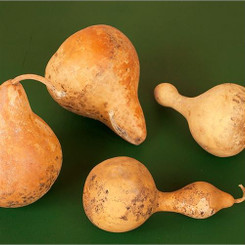 GOURDS - GOURD ASSORTMENT - NATURAL - 12 PCS