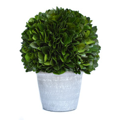 PRESERVED LAUREL BALL ON POT - 13""