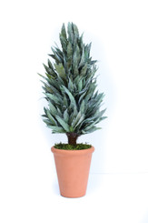 PRESERVED MAHONIA FROSTED CONE TOPIARY - 20""