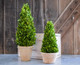 """Shown with 11"""" Cone Topiary"""