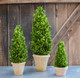 """Shown with 24"""" & 11"""" Cone Topiary"""
