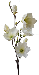 "TULIP MAGNOLIA BRANCH 40"" - CREAM"