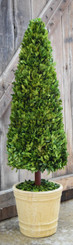 Preserved Boxwood Topiary Cone - 43""
