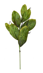 SOUTHERN MAGNOLIA LEAF SPRAY 22""