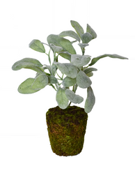 "LAMBS EAR 11"" POTTED DECOR"