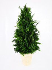 EMERALD CYPRESS CONE TOPIARY 20""