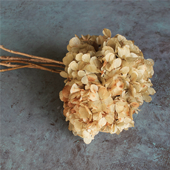 Preserved Hydrangea - Natural - 3 pcs - packed 12
