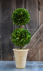 """PRESERVED BOXWOOD TOPIARY - DOUBLE BALL - 20"""""""