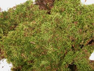 Sheet Moss - Natural  - 3 lb - Green