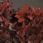 Transparent Oak Leaves - Chocolate