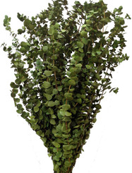 BABY EUCALYPTUS - CITRUS - 16 OZ BUNCHES