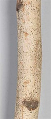 RIVER BIRCH POLE - NATURAL - 4 PC