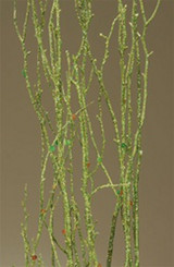 Sequin Birch Branches - Chartreuse Sparkle - 12 Bunches