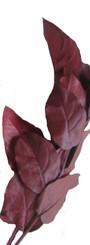 Salal - Preserved - 8 Lbs Bulk  - Burgundy
