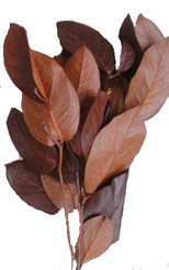 Salal - Preserved - 8 Lbs Bulk - Copper