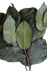 Salal - Preserved - 8 Lbs Bulk - Olive