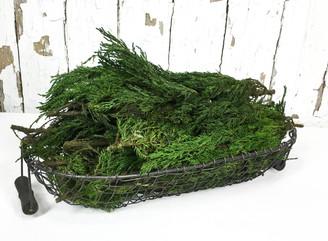 Preserved Tuscan Cypress - Bulk - 4.4lbs