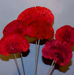 Sponge Mushrooms - Stem - Red