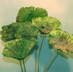 Sponge Mushroom - Stem - Spring Green