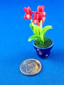 Red Iris in Pot
