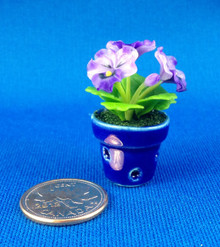 Purple Pansy Plant