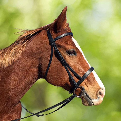Black Leather Cavesson Bridle
