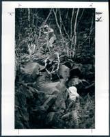 http://images.mmgarchives.com/MC/A-112-MC/AB-1309-MC/AFV-922-MC_F.JPG