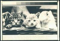 http://images.mmgarchives.com/MC/A-082-MC/AB-9886-MC/AHV-866-MC_F.JPG