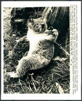 http://images.mmgarchives.com/BS/A-327-BS/AF-1044-BS/BHE-569-BS_F.JPG