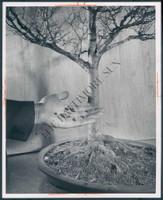 http://images.mmgarchives.com/BS/A-298-BS/AH-8493-BS/BJR-656-BS_F.JPG