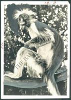 http://images.mmgarchives.com/BS/A-476-BS/AP-1869-BS/HAQ-061-BS_F.JPG