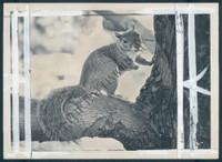 http://images.mmgarchives.com/BS/A-373-BS/AF-1746-BS/BPE-388-BS_F.JPG