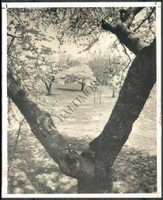http://images.mmgarchives.com/BS/A-308-BS/AQ-4400-BS/BIY-516-BS_F.JPG