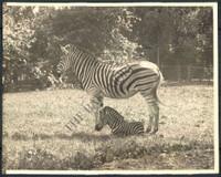 http://images.mmgarchives.com/BS/A-210-BS/AF-1099-BS/BDS-776-BS_F.JPG