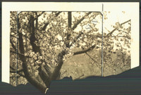 http://images.mmgarchives.com/BS/A-308-BS/AQ-4400-BS/BIY-514-BS_F.JPG