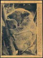 http://images.mmgarchives.com/BS/A-327-BS/AF-1044-BS/BHE-573-BS_F.JPG