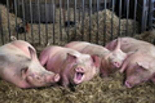 H1N1 Swine Influenza (Safety Video)