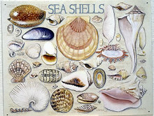 SEA SHELLS SIGN