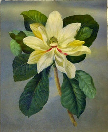 WHITE FLOWER OIL PAINTING