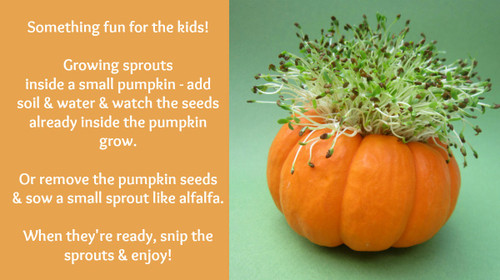 Pumpkin Sprouter Craft Project