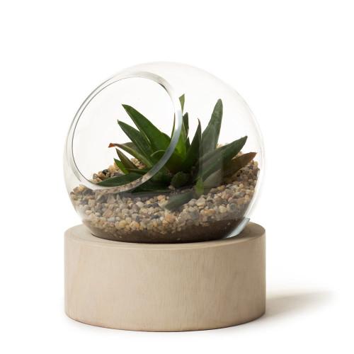 Orbit Terrarium (Small)